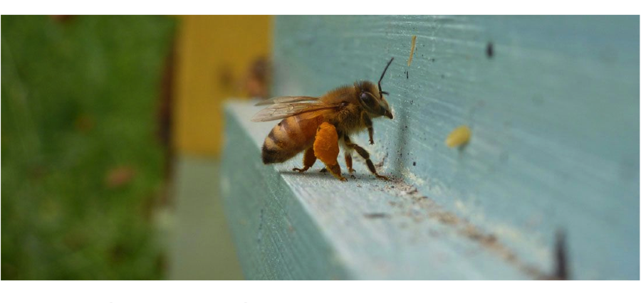 A Year in the Apiary: Beginner and Intermediate Beekeeping and Queen Rearing