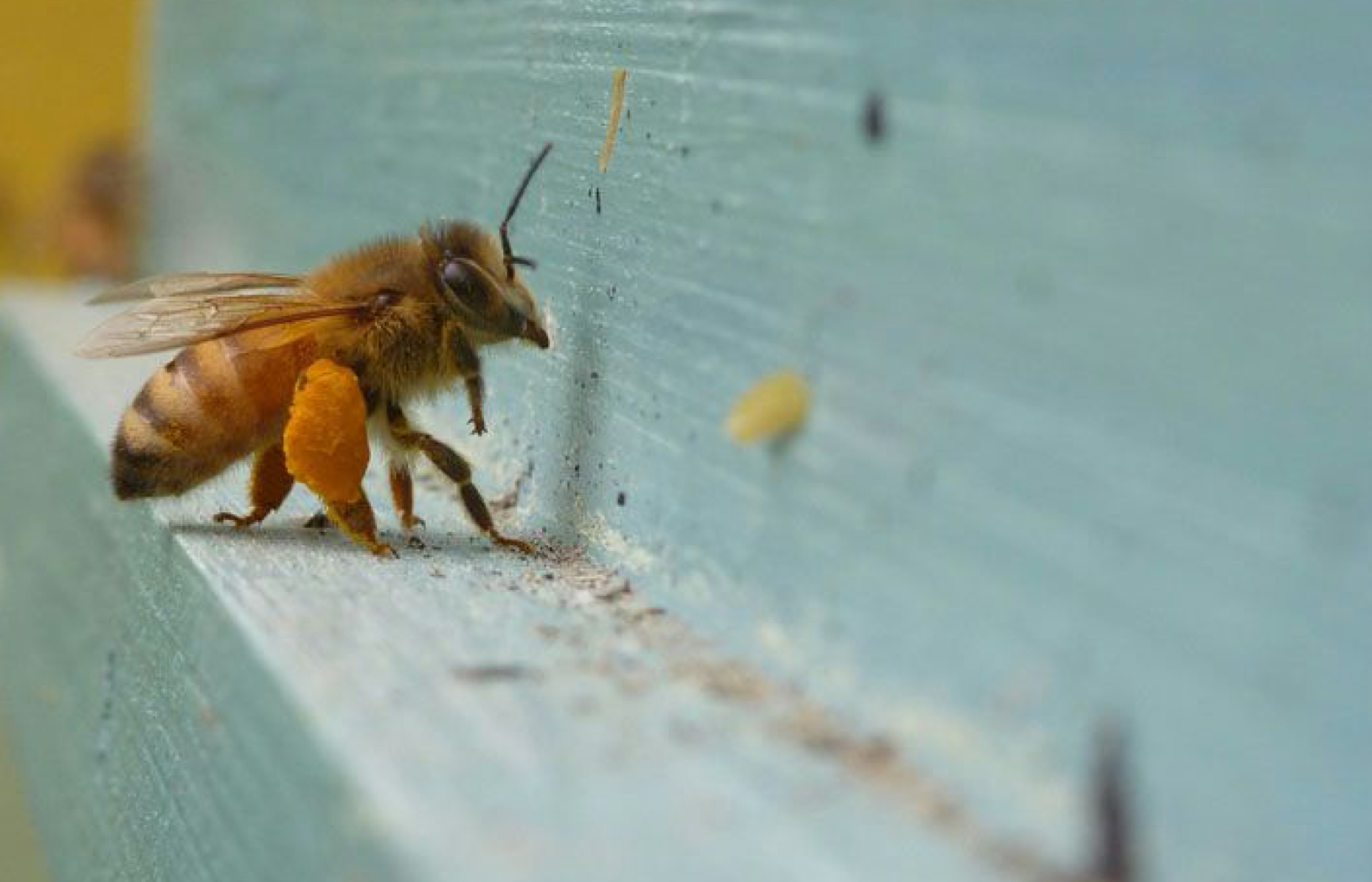 A Year in the Apiary: Queen Rearing